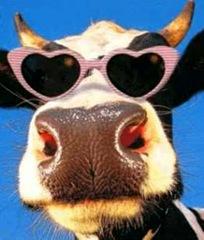 CowFace1